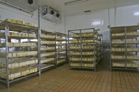 Monitoring of freezers and cold rooms
